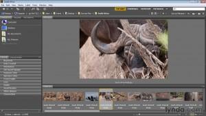 آموزش بریج سی سی برای عکاسان - Bridge CC for Photographers