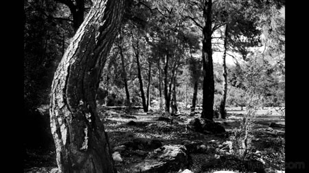 دانلود آموزش مبانی عکاسی سیاه و سفید - Foundations of Photography: Black and White 2